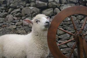 lamb wheel